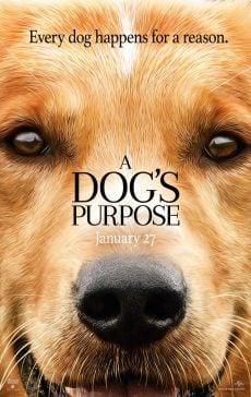 دانلود فیلم A Dogs Purpose 2017