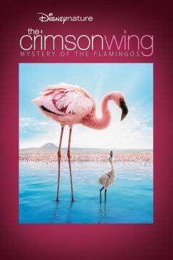 دانلود فیلم The Crimson Wing Mystery of the Flamingos 2008