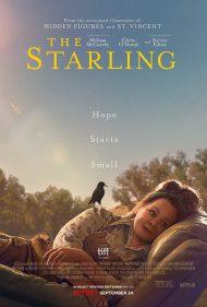 دانلود فیلم The Starling 2021